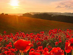 anzac_day_poppies1