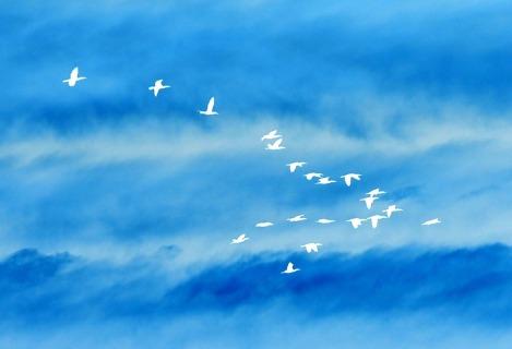 birds-707348_1920